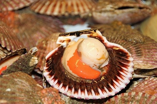 Scallop-on-shell